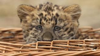 Хиляди диви животни бяха конфискувани при мащабна международна операция срещу незаконния трафик