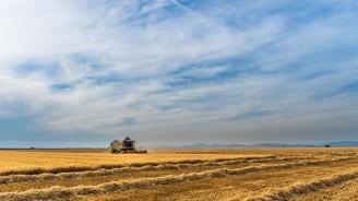 Жътвата на ечемикав Ямболска областприключва при среден добив 451 кг от декар