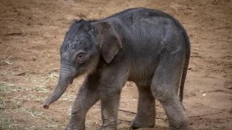 Във виенския зоопарк Шьонбрун се роди слонче
