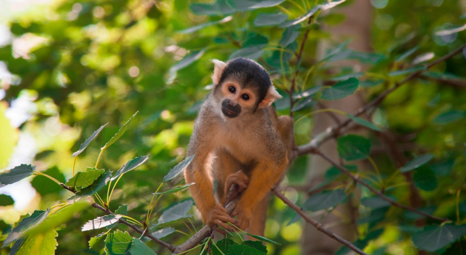 Фосил на миниатюрна маймунка беше открит в Кения
