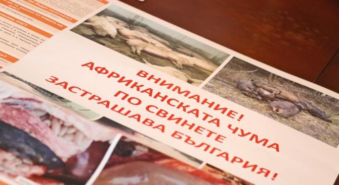 Започва броене на свинете в Хасковска област заради африканската чума