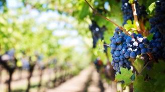 МЗХГ изготви Национален план за развитие на биологичното производство до 2027 г.