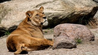 Зоопаркът в Хасково получи лиценз до август 2024 година