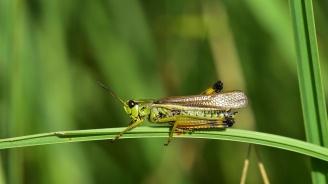 Ядливите насекоми са по-богати на антиоксиданти от портокаловия сок