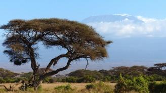 Кения гони чужденци, включително от България, оглавяващи компании за спортни залагания