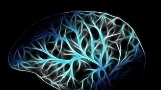 Компания на Илон Мъск ще тества интерфейс, свързващ мозъка с компютри