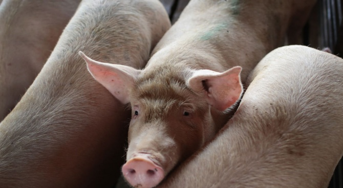 """ДФ """"Земеделие"""" преустановява проверките на място във всички животновъдни стопанства"""