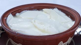 Дегустират уникален вид капанско кисело мляко в Разград