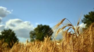 12 декара пшеница са изгорели при пожар