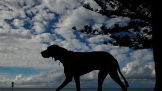 Куче надуши тон дрога в Батман