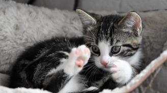 Щатът Ню Йорк забранява рязането на ноктите на котките