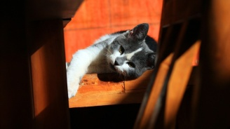 Котка оцеля след падане от 18-ия етаж