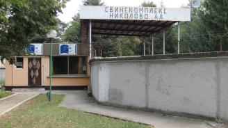 Експерт: Чумата по свинете в България е катастрофа