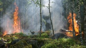 Хиляди хектари гори и култури бяха опустошени от пожари във Франция
