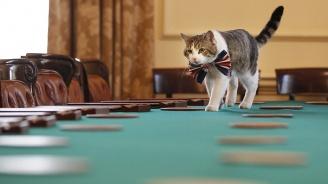 """Борис Джонсън ще вземе куче за компания на котарака Лари на """"Даунинг стрийт 10"""""""