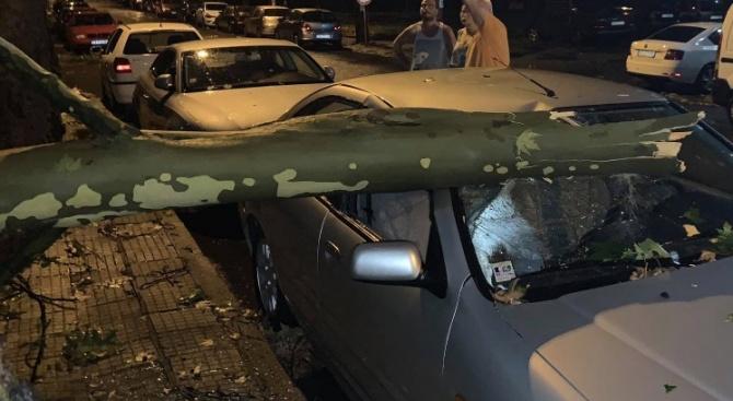 Дърво смачка колата на бащата на Караянчева