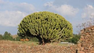 Етиопия постави рекорд за най-много засадени дървета за един ден