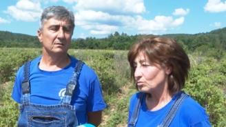 Семейство розопроизводители от Казанлъшко изпадна в безизходица