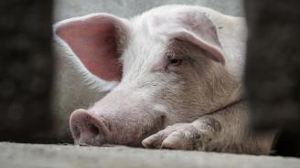 Астроложката Алена: Меркурий ще отмъсти на всички, които крият прасетата си