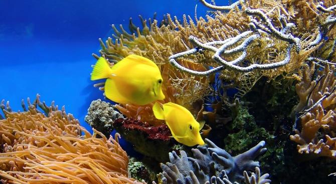 Честите и интензивни морски топлинни вълни представляват по-сериозна заплаха за