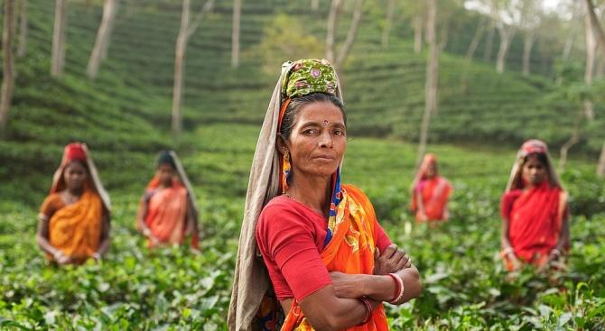 Над 220 милиона дръвчета бяха засадени днес в Северна Индия