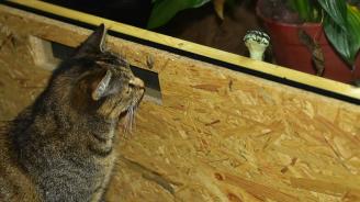 Домашна котка хвана кралски питон и спаси стопаните си