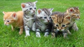 Интересни факти по случай Международния ден на котката