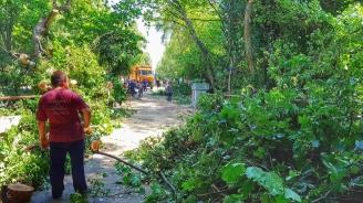 Разчистват опасни дървета в Ямбол