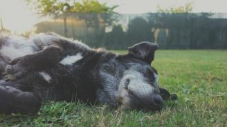 Неизвестен обра къща и уби кучетата на собственика