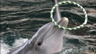 Делфинче почина в делфинариума във Варна по време на представление