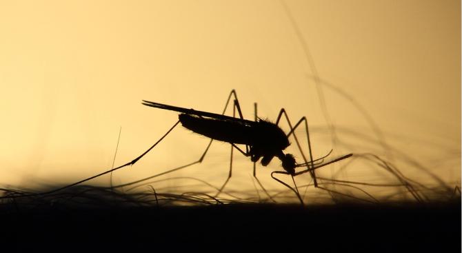 Снимка: Изчислиха любимата кръвна група на комарите