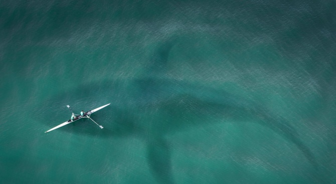 Учени откриха акула, родена през 1505 година