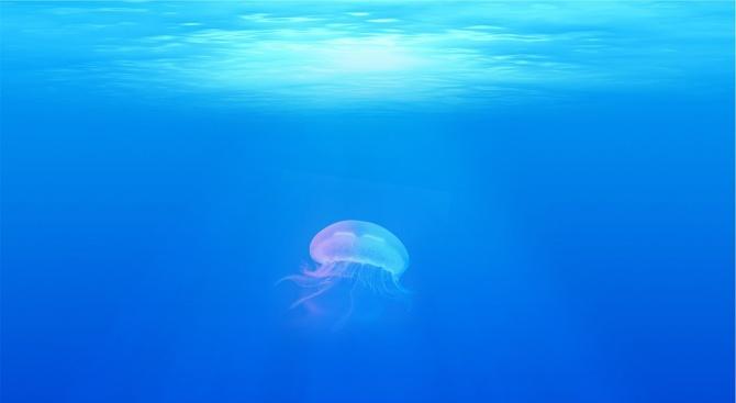 Нашествие на медузи в морето
