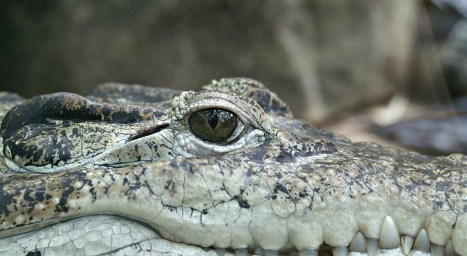 10-годишно дете стана жертва на крокодил във филипинската провинция Палаван,