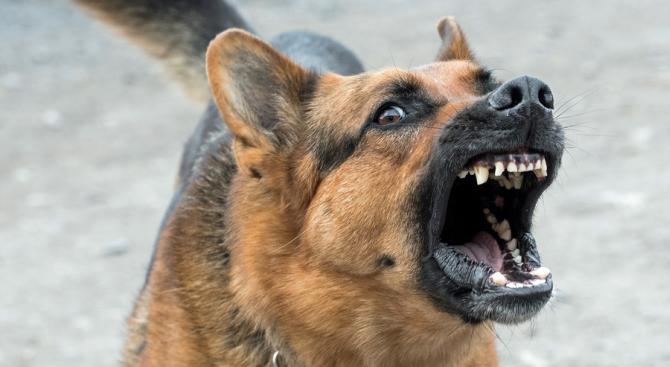 Прокуратурата подхвана инцидента с нахапано от куче дете в Дупница