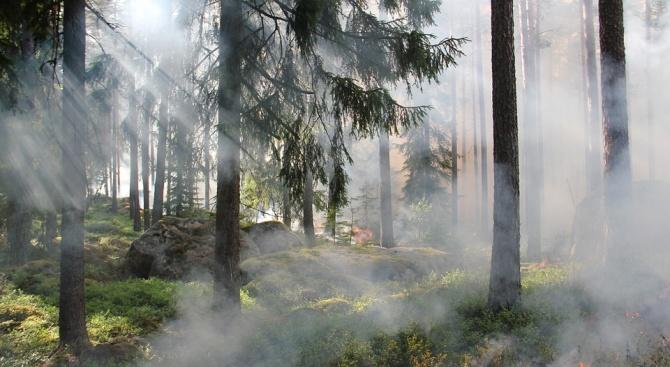 Горски пожар бушува в турския егейски окръг Мугла, предаде Анадолската