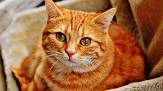 Двойка печели 1 милион лири от лотарията благодарение на гладната си котка