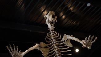 Генетично изследване: Хората са виновни за изчезването на пещерните мечки