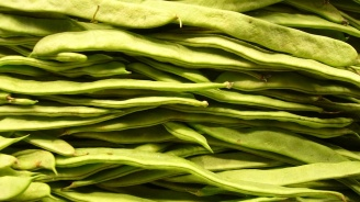 В Добричкия регион се очаква да бъде прибран по-малко фасул от миналата стопанска година