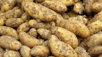 Косово забрани вноса на картофи и мед от Северна Македония