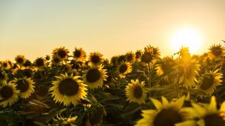 Очаква ни слънчева събота