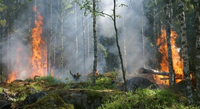 Силен пожар пламна в провинция Измир