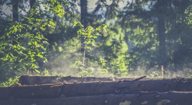 Шест горски кооперации и дружества в община Чепеларе спират работа