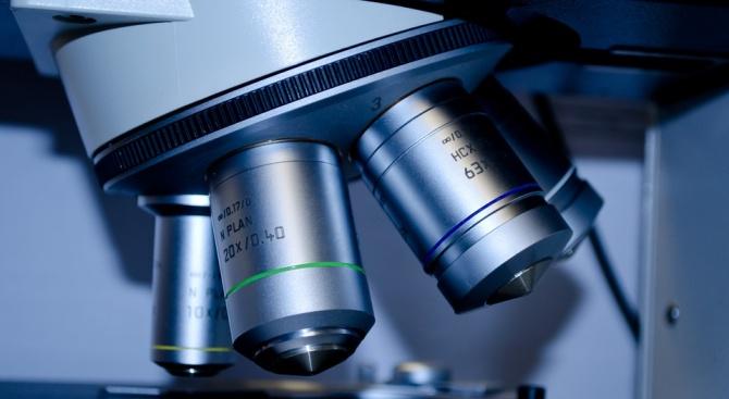 Учени работят усилено по ваксина срещу африканската чума по свинете