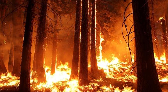 Все още бушува големият пожар, който избухна снощи край село