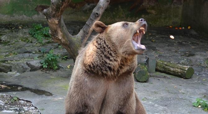 Двама мъже бяха нападнати днес от мечка в окръг Арджеш,