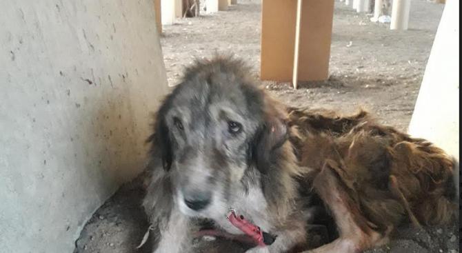 """Завързаха куче край метростанция """"Ломско шосе"""" без вода и храна"""