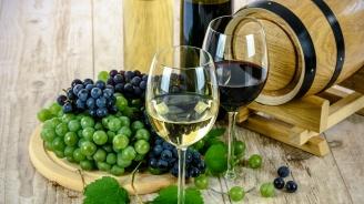 В Плевен представят най-подходящите за отглеждане у нас десертни и винени сортове лози