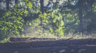 Блокиран е дърводобивът в Чепеларе заради огнище на чума