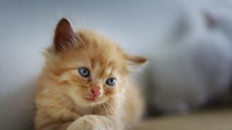 Продават котка, която лекува махмурлук и предпазва от похотливи съседки